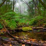 Bosque del Cedro, Parque Nacional de Garajonay, © Luis M. Anibarro